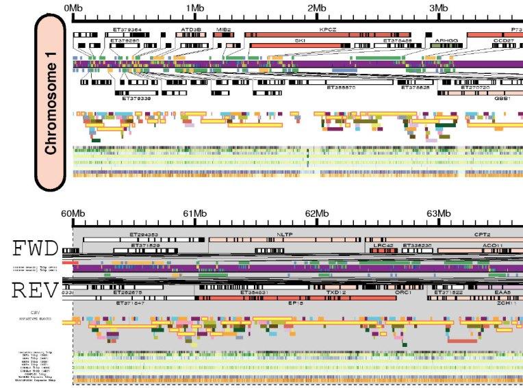 Craig Venter Genome